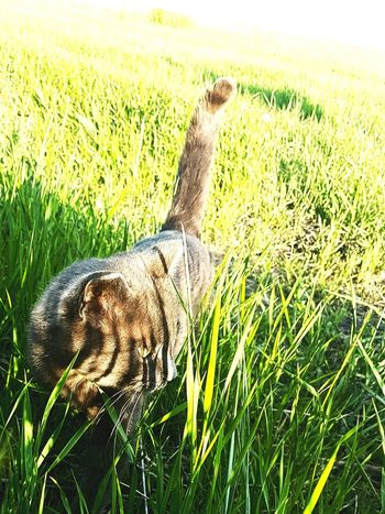 Farmcat Nature Animal Wildlife Beauty In Nature Grass Outdoors Photography Farmlife Catlife Catlove
