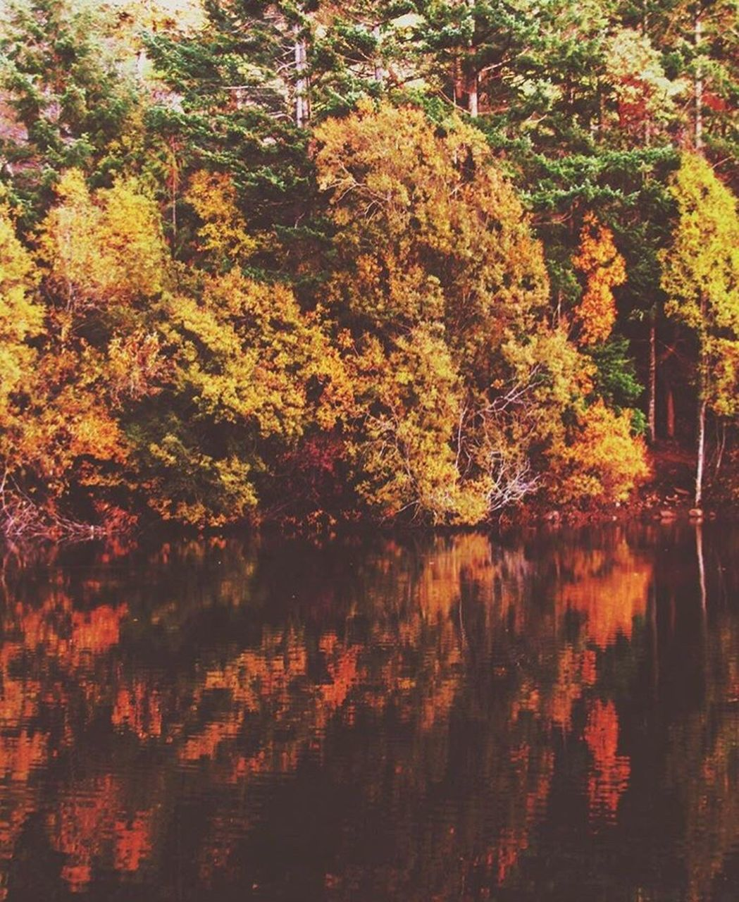 tree, autumn, reflection, nature, beauty in nature, tranquility, tranquil scene, change, water, scenics, outdoors, no people, growth, lake, day, leaf, waterfront, forest, sky