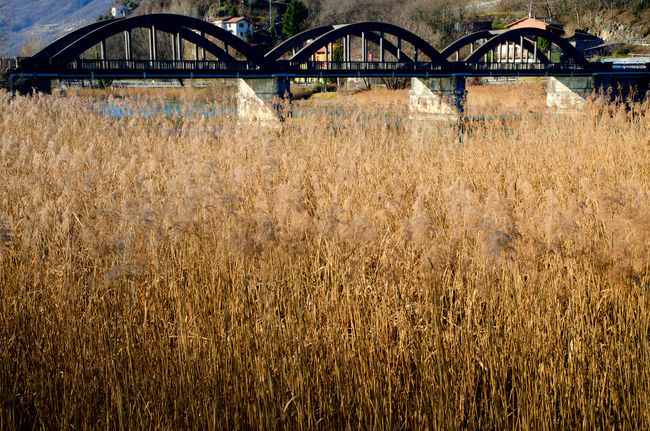 Bridge and pampas grass in Lombardy, Italy. Arch Architecture Beauty In Nature Bridge Bridge - Man Made Structure Built Structure Color Connection Day Lago Di Como Lake Landscape Metal Nature No People Outdoors Pampas Grass River Seagrass Sunny Tranquility Water
