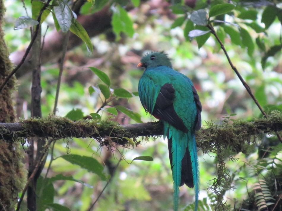 Animal Themes Animals In The Wild Bird Costa Rica Nature At Its Best Nature Up Close Quetzal Travel The World