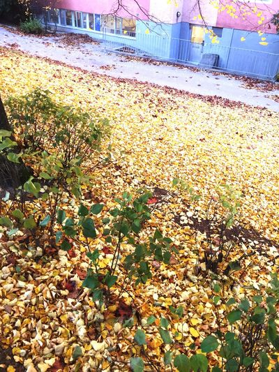 """This is why it's called """"fall"""" I guess. Fall Fall Colors Fall Leaves Leaves"""