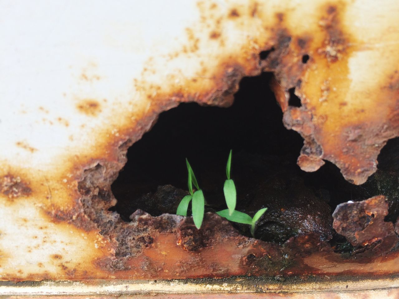 Small Green plants are growing on the hole full of rust Rusty Small Plant Green Natural Hole In The Wall Rust On Car