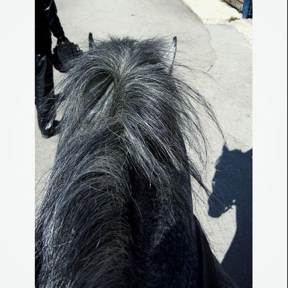 ❤💞💓💖💘 Instagram Instahorse Thoroughbredsofinstagram Thoroughbred caballo pferde purasangreingles horsesofinstagram horse