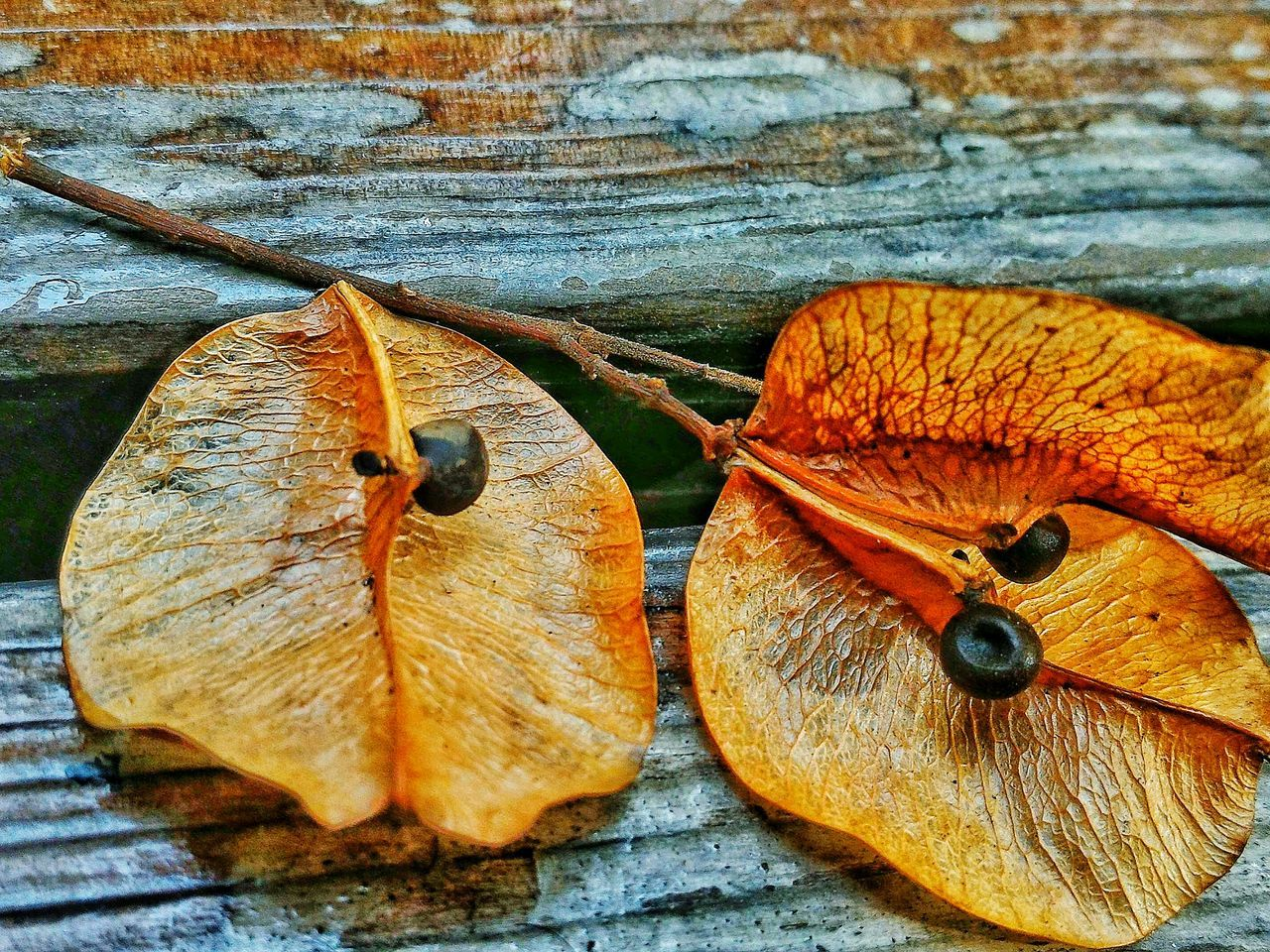 fruit, no people, leaf, close-up, day, nature, change, outdoors, food and drink, healthy eating, food, freshness, beauty in nature