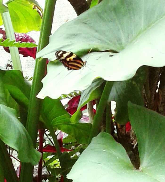 Monarch Butterfly Beatiful Details Leaves Only Leaves Home Sweet Home