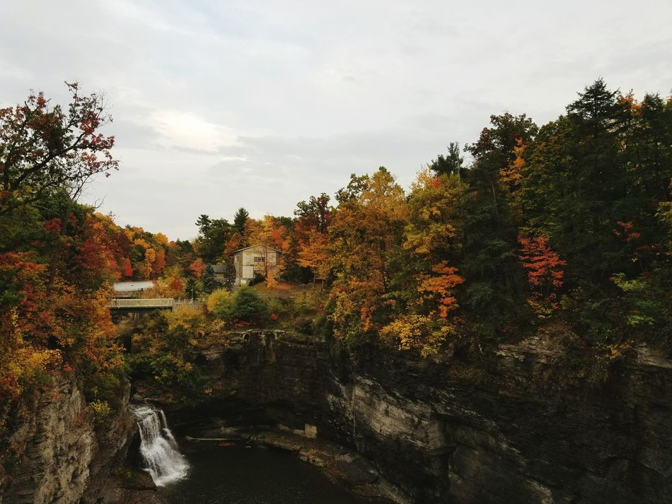 Fall Colors Fall Leaves Fall Ithaca Cornell University Waterfall Bridge View Nature Tree Outdoors Tree Growth Nature Arrival Water Sunset Architecture No People Outdoors Beauty In Nature Sky Day First Eyeem Photo Phone Phonecamera