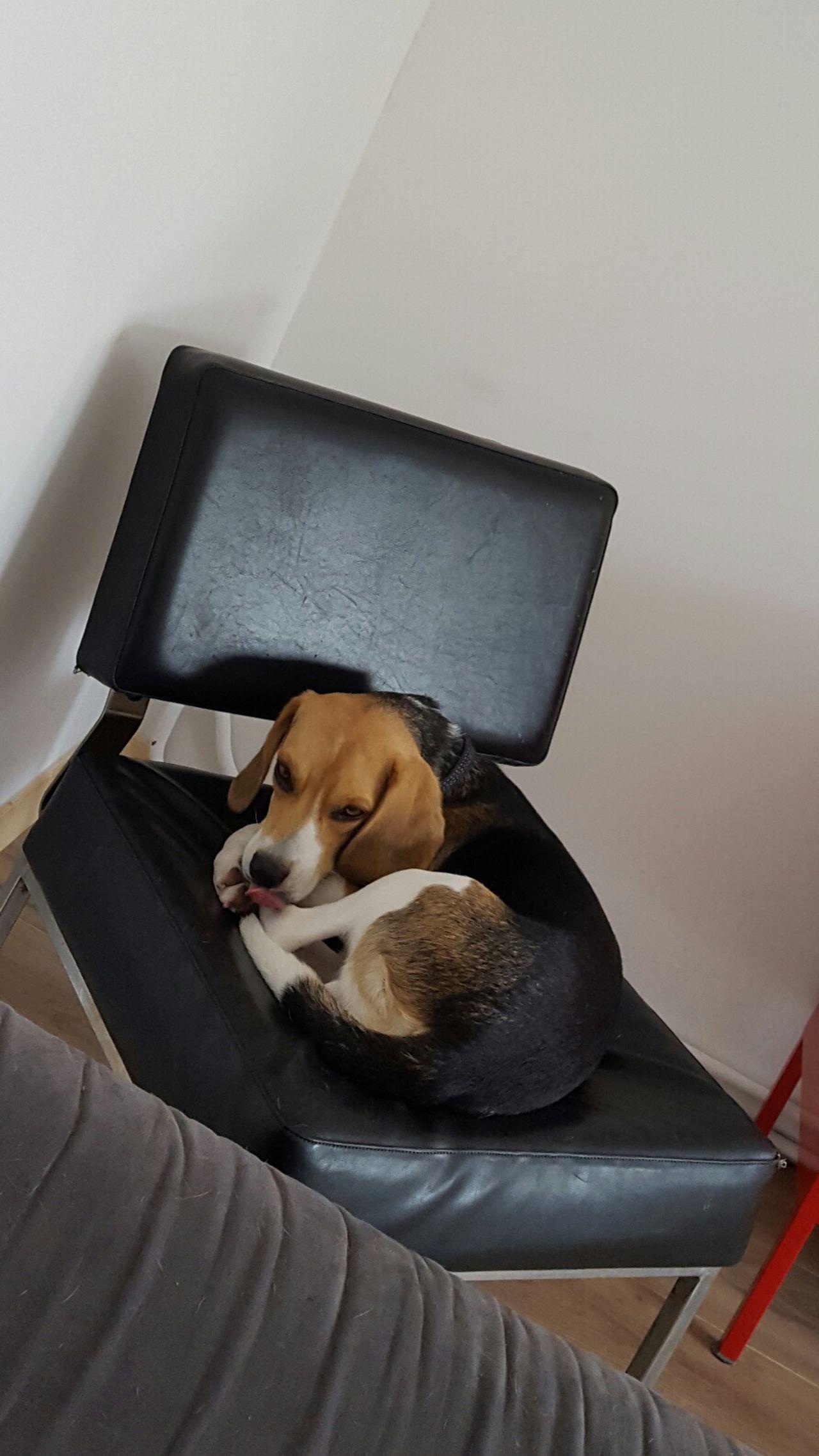 Always Be Cozy