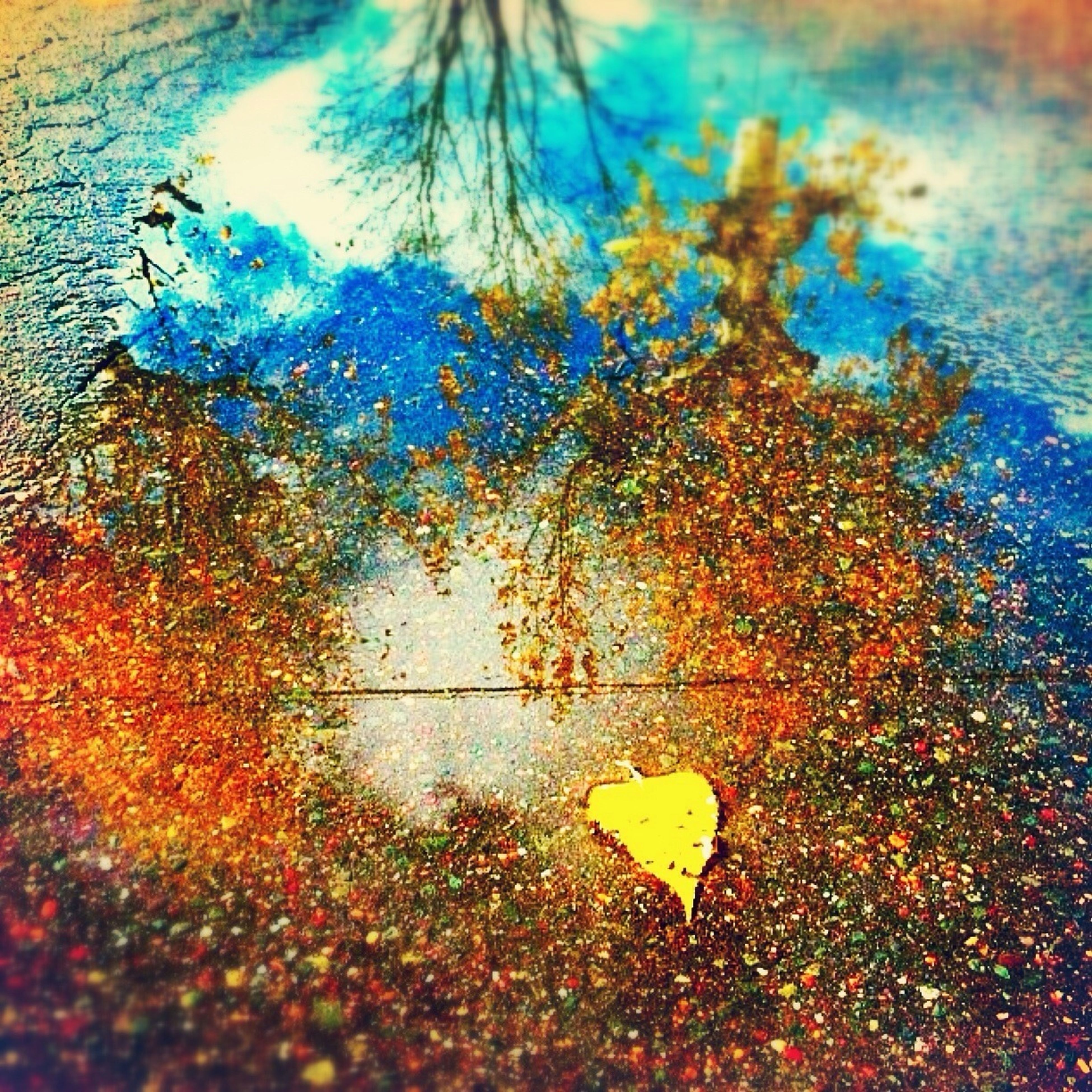 autumn, season, tree, change, leaf, yellow, no people, window, wet, close-up, day, reflection, nature, sky, puddle, water, indoors, fallen, blue