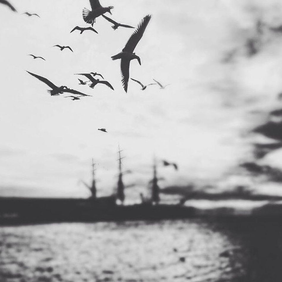 Birds. Sky Birds Flying Molo Audace Amerigo Vespucci Water Rest TriesteSocial Trieste Infrontof Color Palette Structures Sittingwaitingwishing Monochrome Photography Adapted To The City