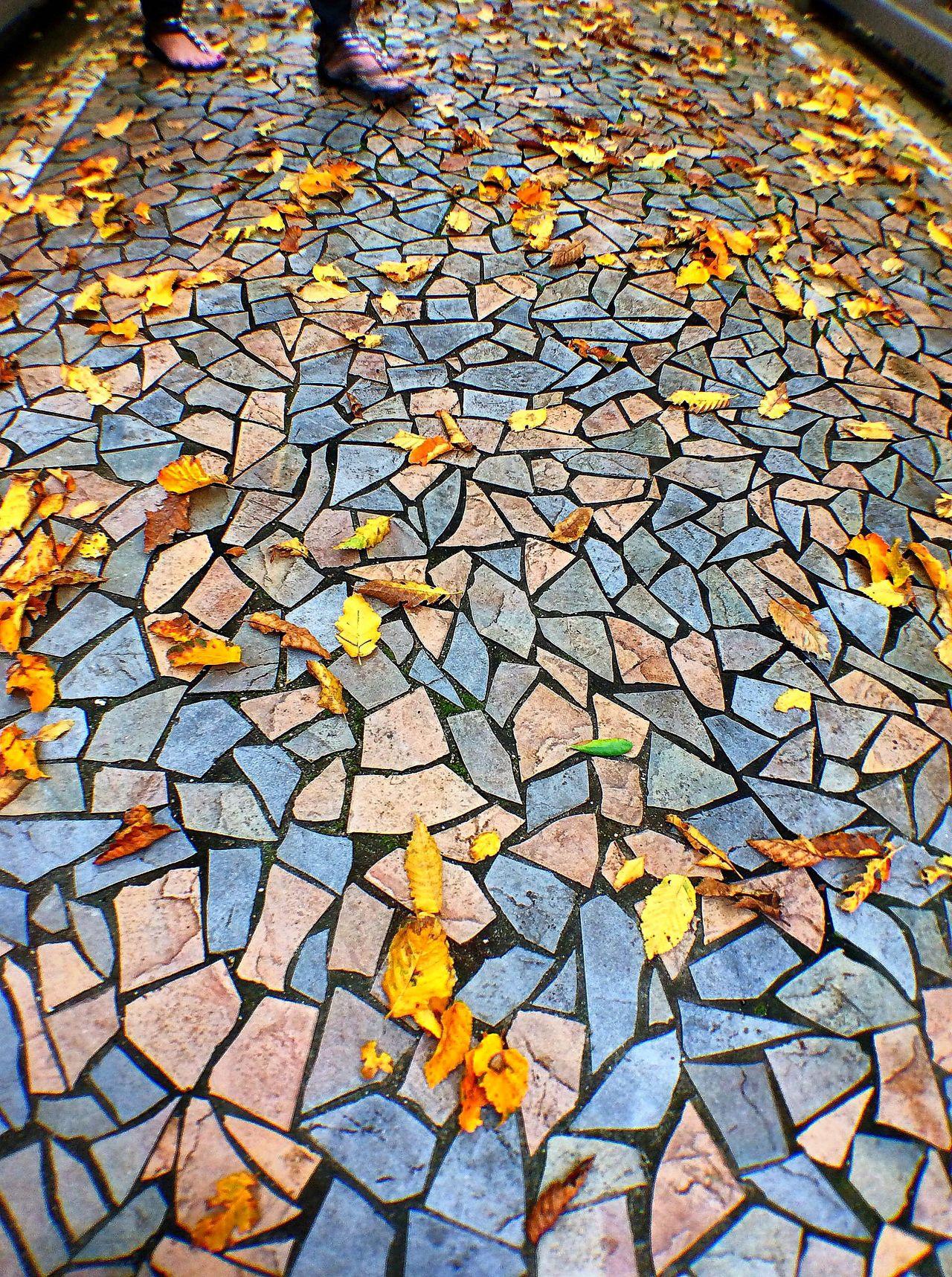 The Global EyeEm Adventure Waikato Hamilton Gardens Hamiltongardens Tiles New Zealand Fall Leaves EEA3_CambridgeNZ EEA3 Ipadphotography Olloclip Pattern Pieces