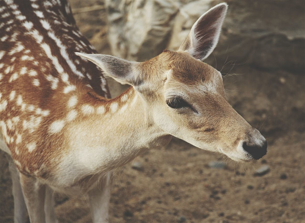 Beautiful stock photos of deer, Animal Markings, Animal Themes, Animals In The Wild, Beauty In Nature