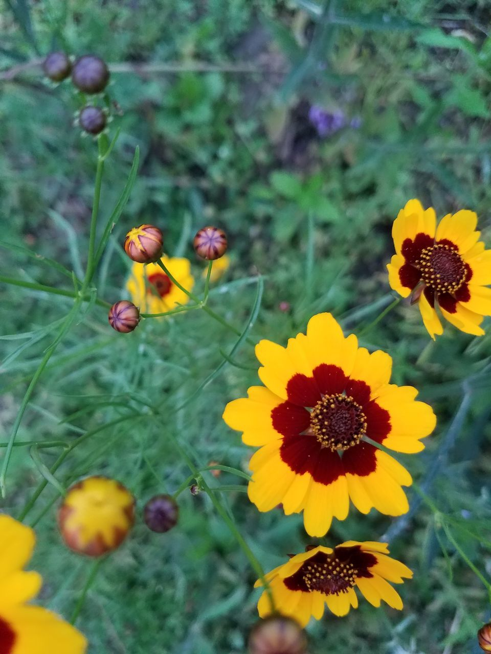 flower, yellow, growth, beauty in nature, nature, plant, fragility, outdoors, day, no people, freshness, petal, flower head, close-up, animal themes