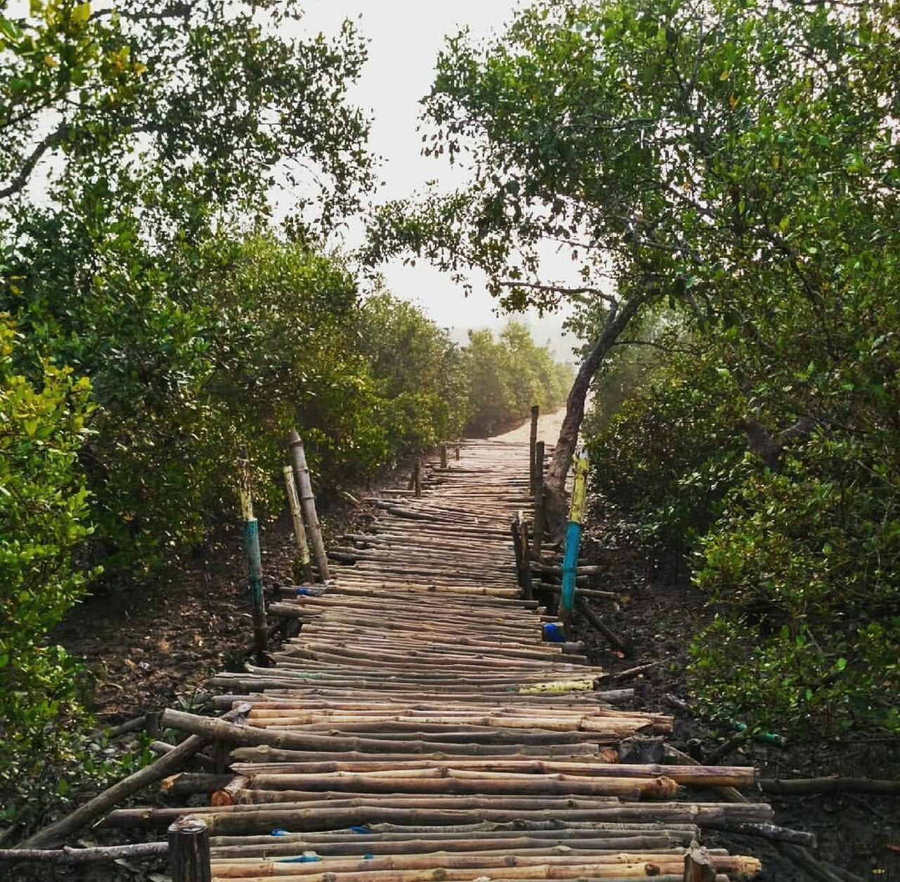 Wooden bridge through the forest Beautiful Beauty In Nature Bridge Brown Day Daylight EyeEm Nature Lover Forest Green Greenery India Landscape Life Nature No People Outdoors Pattern Plant Serenity Sky The Way Forward Trail Tranquility Tree Wooden EyeEmNewHere