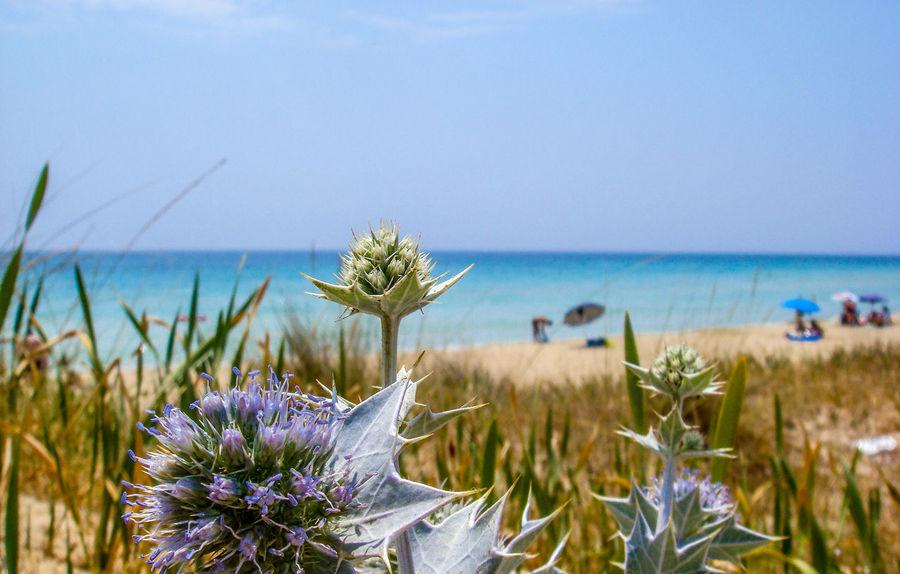 Playa del sur de Italia Beach Nature Flores De Plastico Flower Lecce Playa Italiana Relaxing Moments Turism Viaje