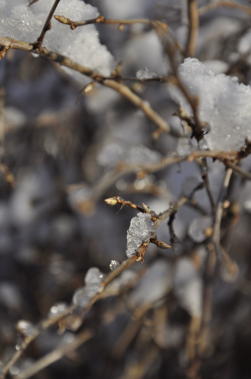 nature, cold temperature, winter, snow, close-up, outdoors, day, no people, beauty in nature, fragility, freshness