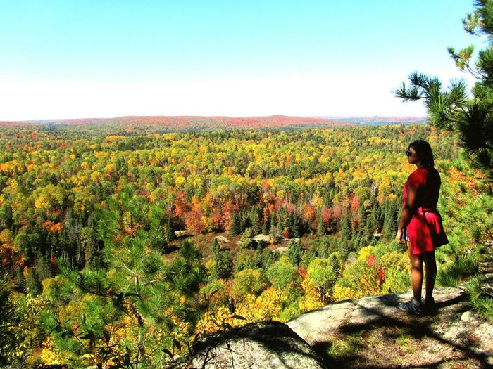 Algonquin Park Ontario Canada Autumn Colors Capture The Moment Naturelovers In Awe Connected With Nature Cherish The Moment Eyem Gallery EyeEm Nature Lover Life Schattenspiel  Perfect Match Landscapes Sea Of Trees Landscapes With WhiteWall