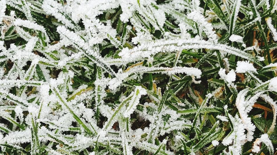 Frozen Frozen Nature On Your Doorstep Grass Photography Close Up Winter Snow Nature High Angle View Cold Temperature Full Frame No People Growth Beauty In Nature Close-up Tree Snowflake Outdoors Plant Environment Backgrounds Day
