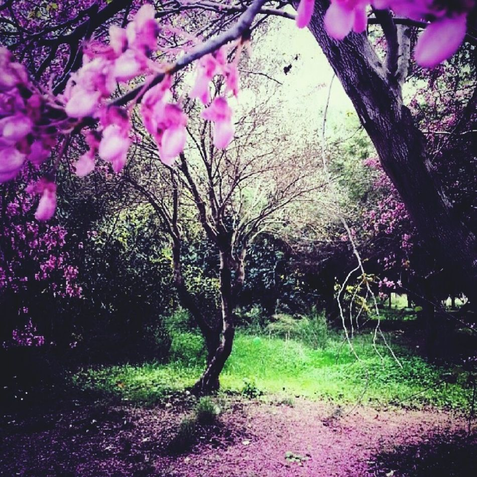 Nature Plants Green Pink Pink Flower Cherry Blossoms Cherries Megical