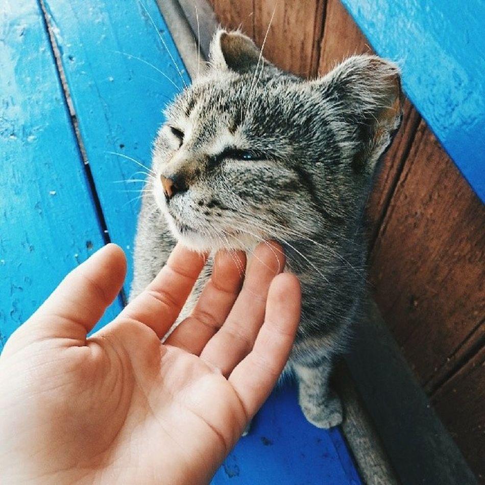 Оо у моей бабушки такой мимимишный котейка хаха:33😻 и вообще на меня нахлынули воспоминания 😊😸 я так там давно не была ,что даже нашла радужку-спиральку хаха до сих пор не могу наиграться😅😱💥 Life Photo Cute Cat Home Homeanimals Admiration Like Love Great Ground Like4life Look Looksogood Likeforinsta Tag Tagforlike Photooftheday