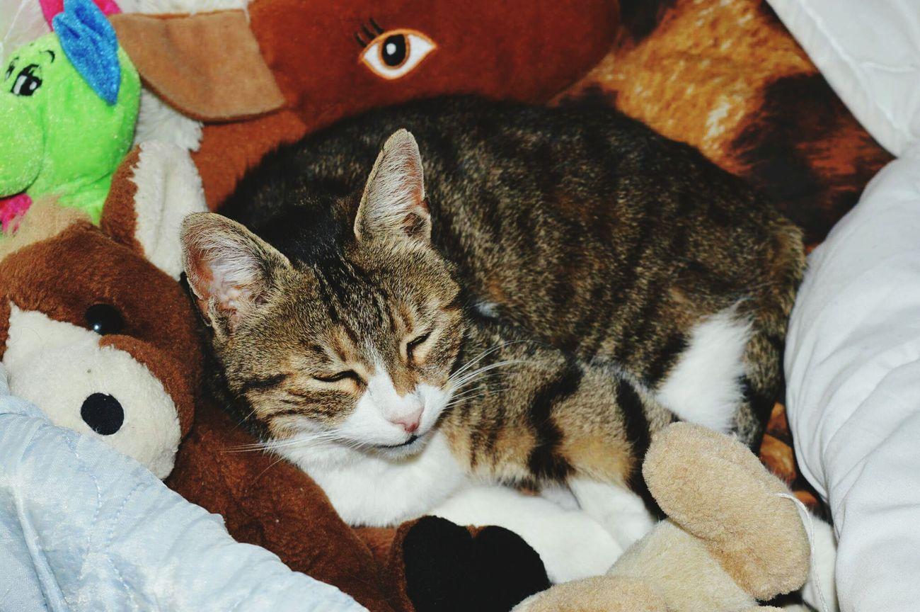 Chat Lit Doudou Doudou ♥  Dodo Cat Cat♡