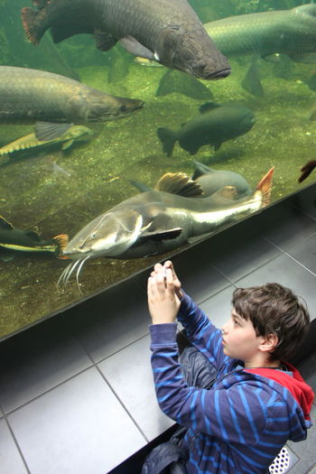 Aquarium Berlin Aquarium Animal Themes Animals In Captivity Aquarium Boys Childhood Day Fish High Angle View Indoors  Large Group Of Animals Leisure Activity Lifestyles Nature One Person People Real People Sea Life Standing Water