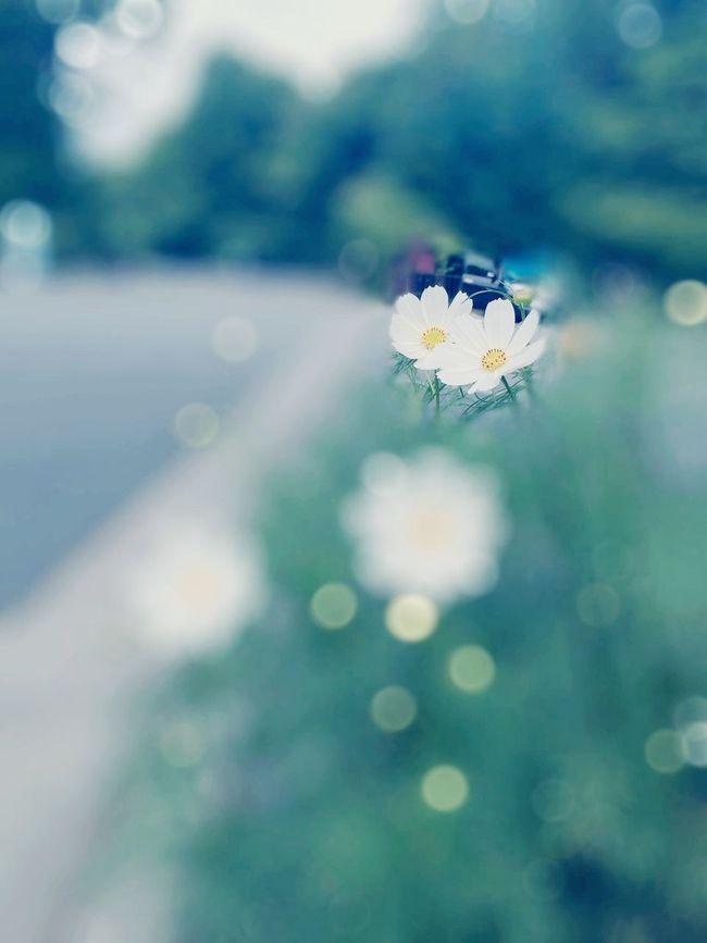 Deathanniversary Memories Love Missing Someone Missingsomeone 🎵To Be Fair and True (Goldmund) https://g.co/kgs/fljJEE Masako201607
