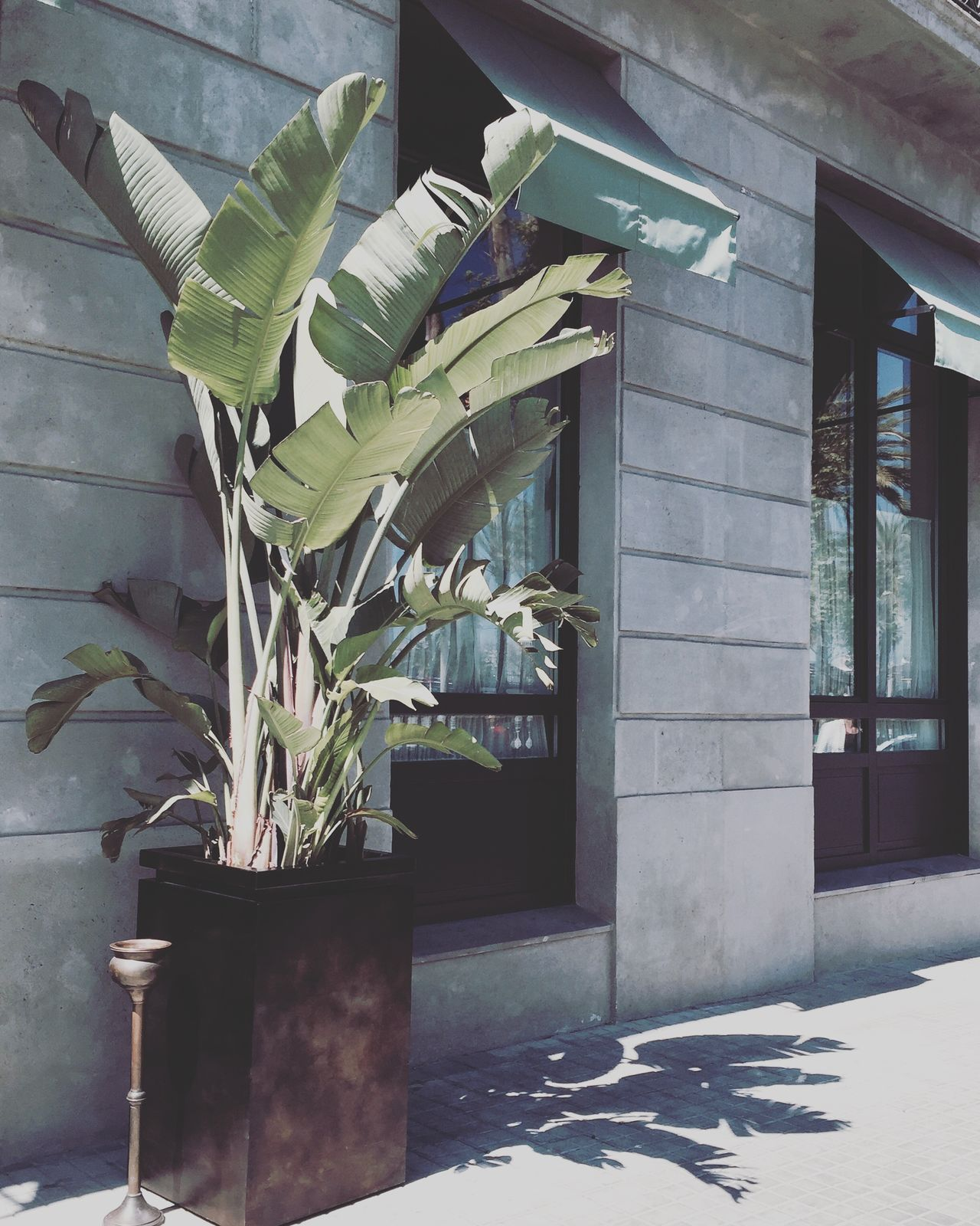 Architecture Banana Banana Leaf Building Exterior Day Exotic Growth Hotel Indoors  Nature No People Plant Smoking Still Life Summer Travel Travel Destinations Vacations