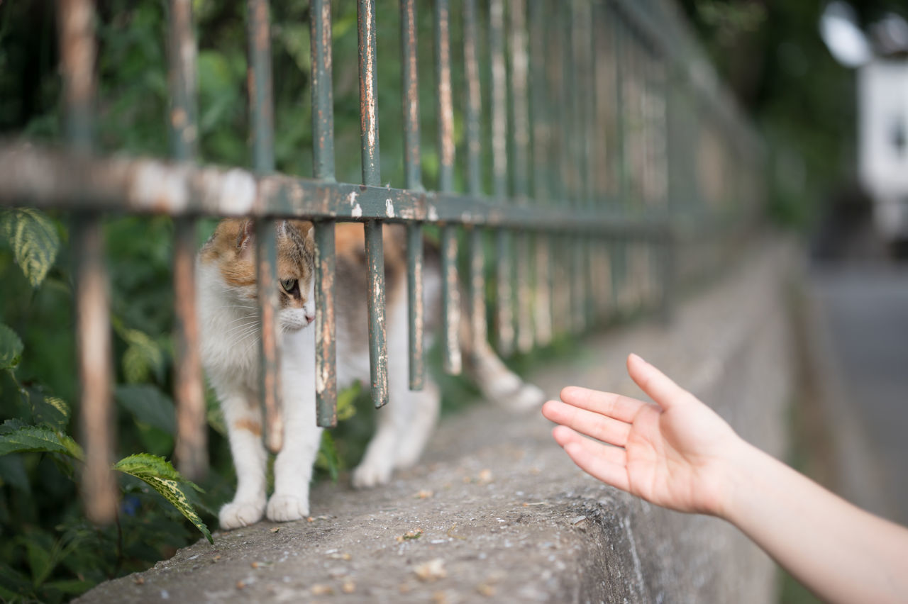Reach Out. Make the Connection! Animal Connection Animal Themes Bokeh Cat Cats Connected With Nature Connection Domestic Animals Domestic Cat Feline Focus On Foreground Holding Human Body Part Human Hand Mammal Natanomalous One Animal One Person Outdoors Pets Reaching Out Real People Stray Cat Street Live For The Story Place Of Heart