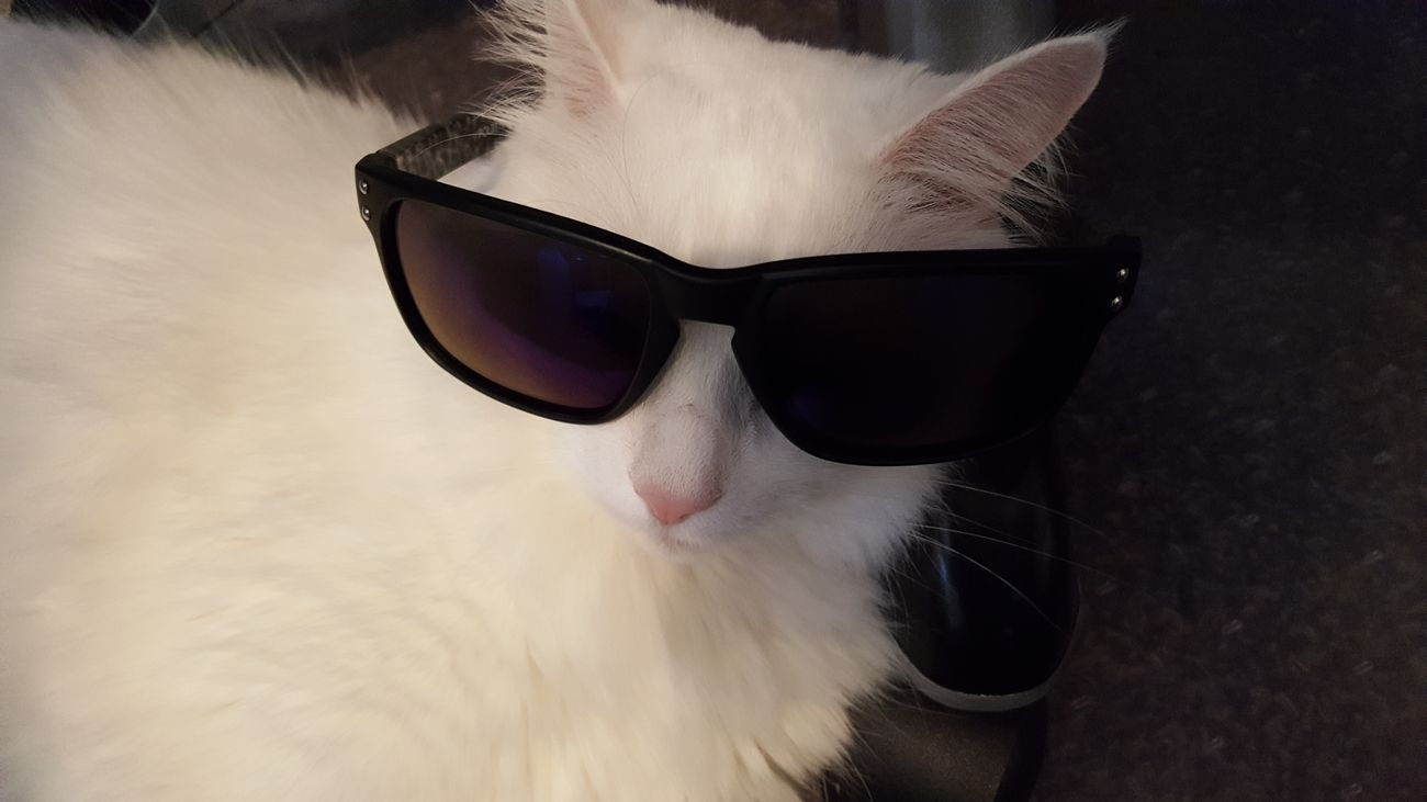 Animal Themes Close-up Day Domestic Animals Mammal One Animal Outdoors Pets Portrait Sunglasses Wearing Young Adult