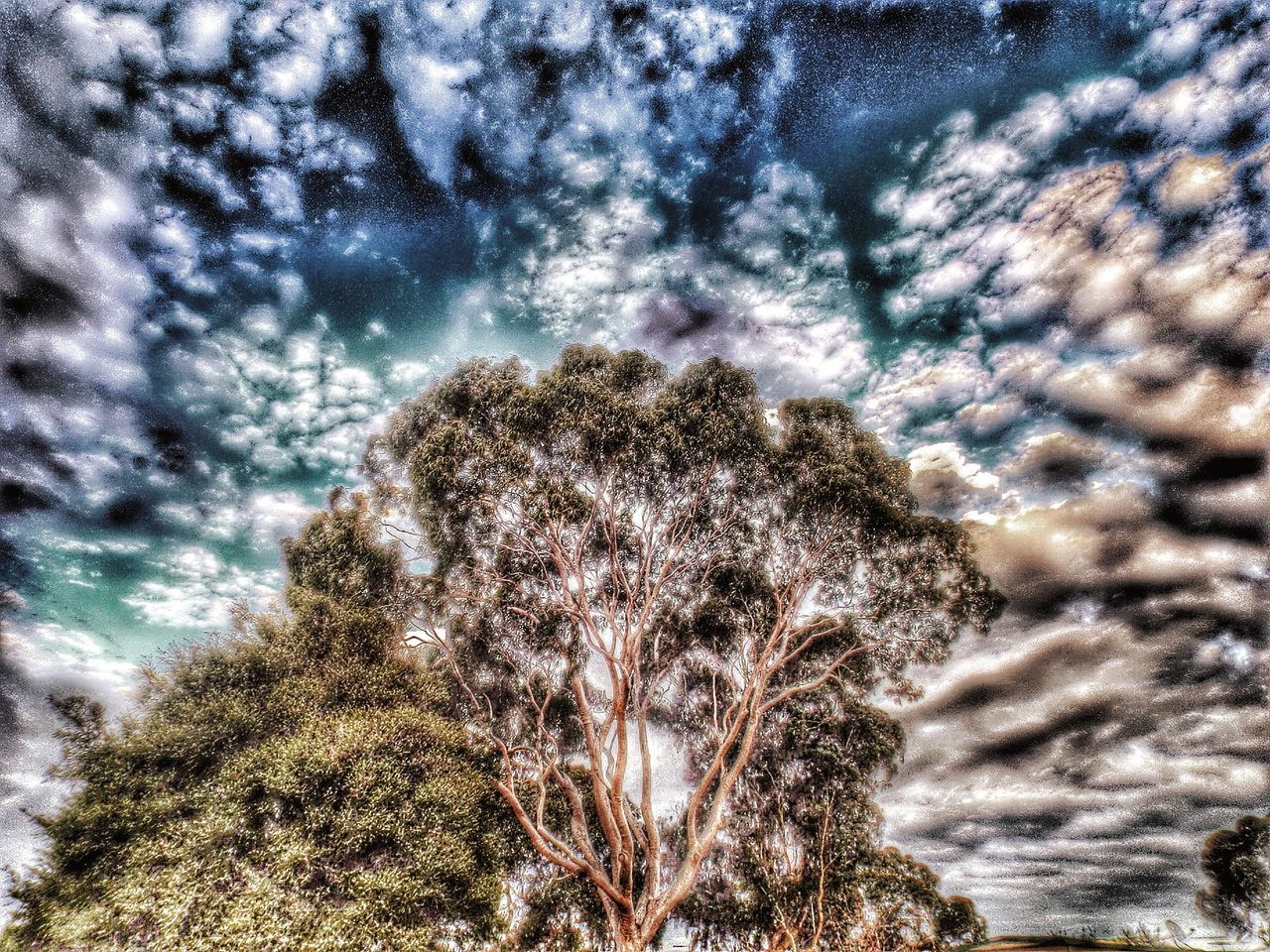 Clouds Clouds And Sky I See Faces Trees And Sky Trees Hdr_Collection HDR Hdr Edit Fun With Editing :)