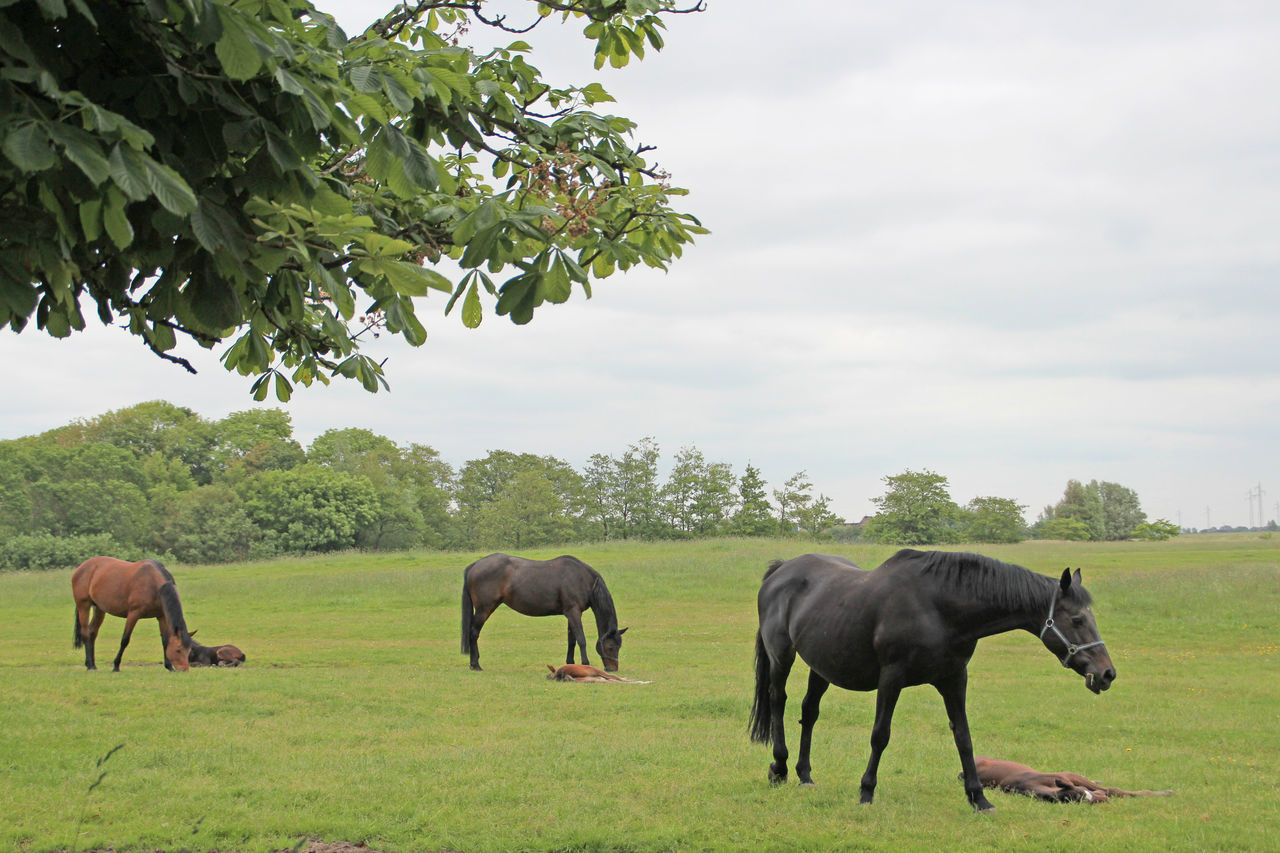 Horses Grazing On Grassy Field Against Sky