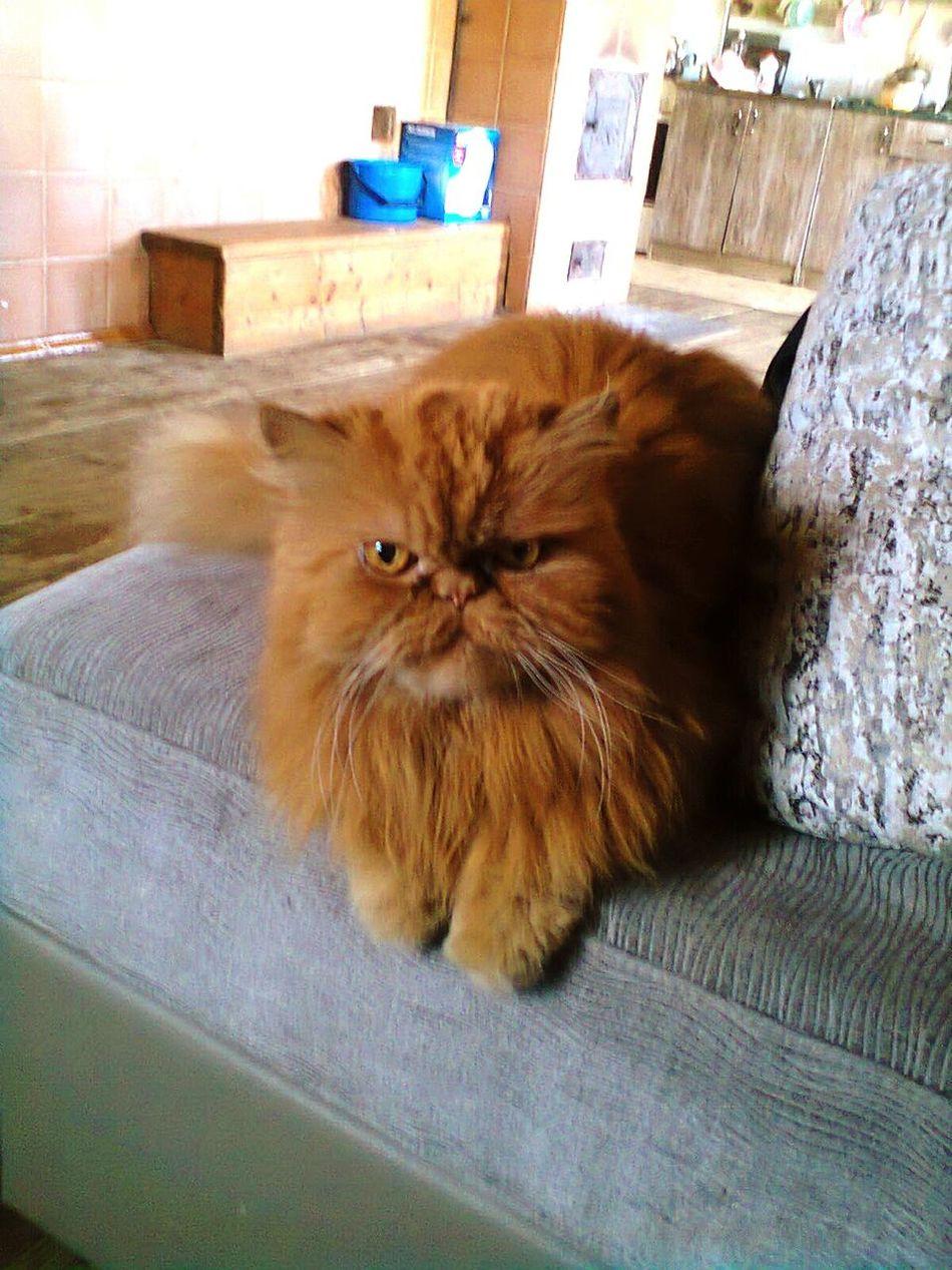 That's my really brutal cat^^ Cat♡ Animal Brutal OldCat