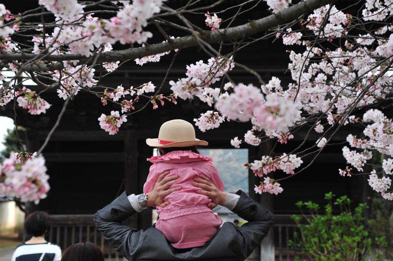 尾道 西國寺 Onomichi Cherry Blossoms 優しい大きな手 肩車 Shoulders EyeEm Best Shots