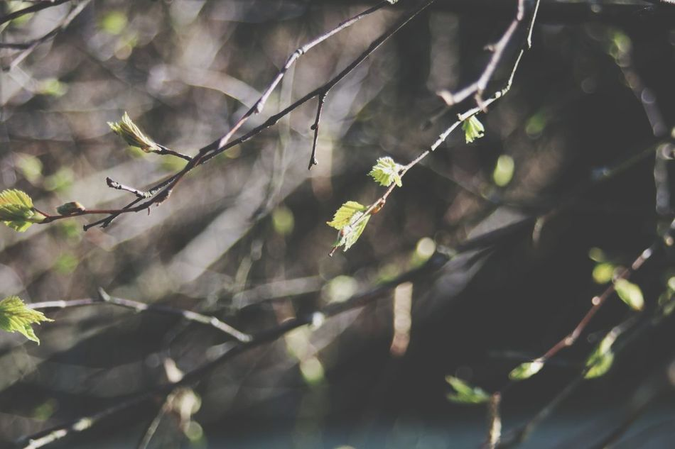 Branch Leaf Nature Animal Wildlife Tree No People Yellow Outdoors Winter Day Close-up Food Long Goodbye Water Nature Beauty In Nature Wood Tranquility Plant Outside Leafes Fresh Spring Green