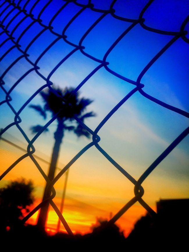 Fence Mesh Mesh Wire Fence Wire Mesh Wire Fence Sunset Palm Tree Atmosphere Atmospheric Sky Holiday Perspective
