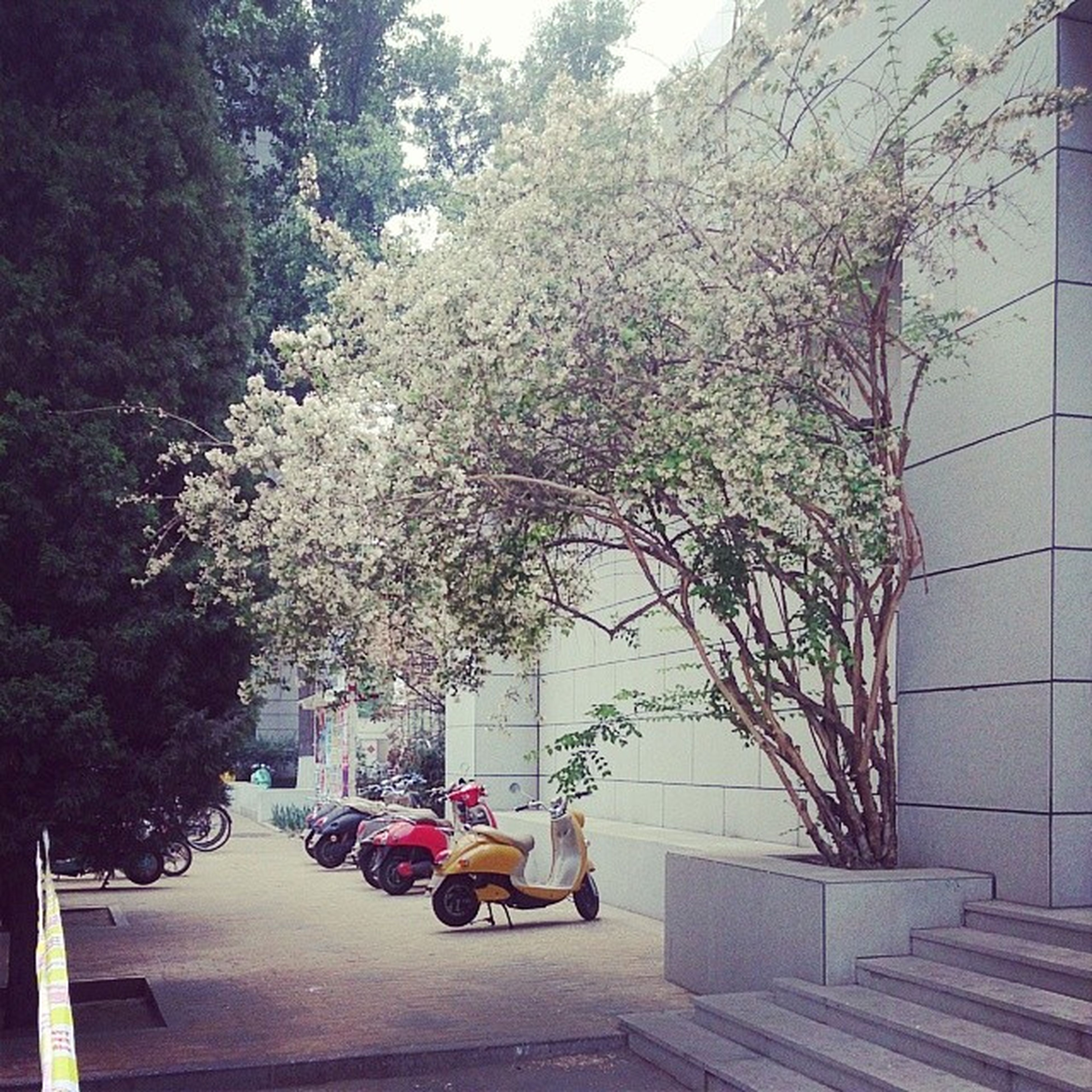 tree, transportation, branch, growth, built structure, building exterior, architecture, car, land vehicle, flower, street, mode of transport, city, road, sidewalk, sunlight, day, footpath, incidental people, park - man made space