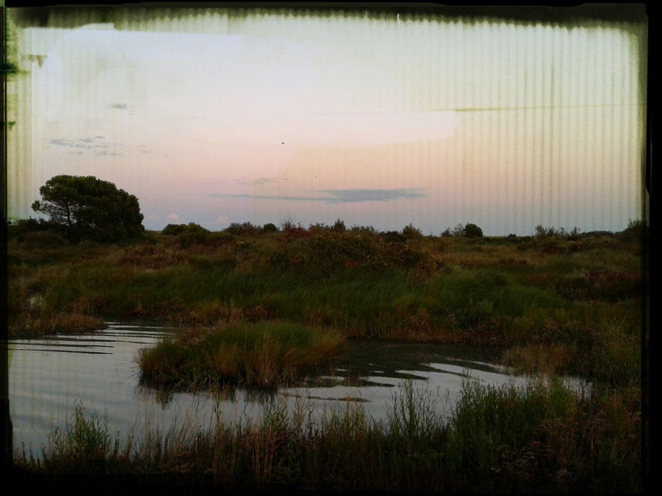 Orto Botanico Rosolina_mare Sun Set Wow *-*