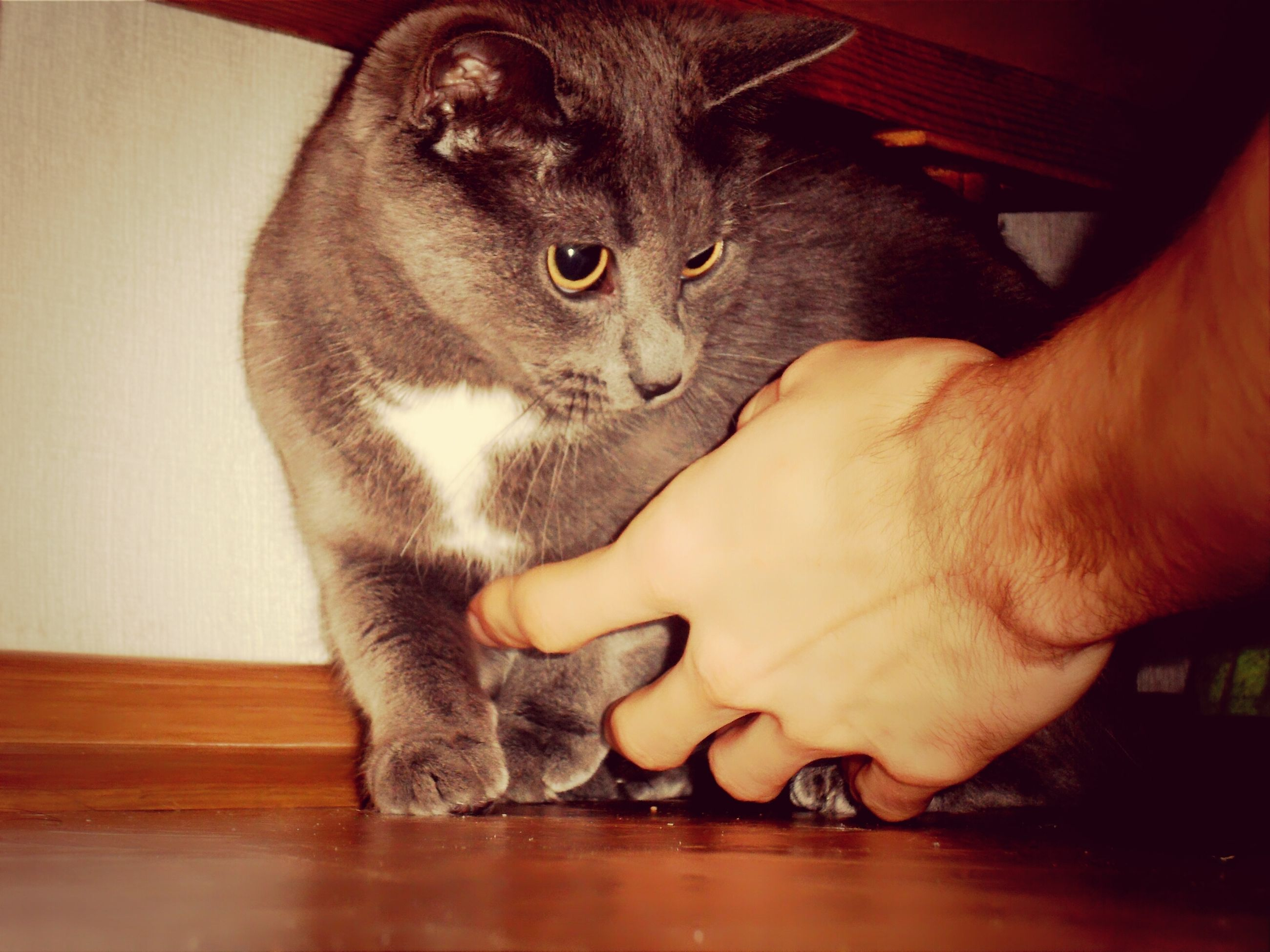 pets, domestic animals, indoors, domestic cat, one animal, animal themes, mammal, person, cat, feline, part of, whisker, holding, home interior, relaxation, human finger, unrecognizable person