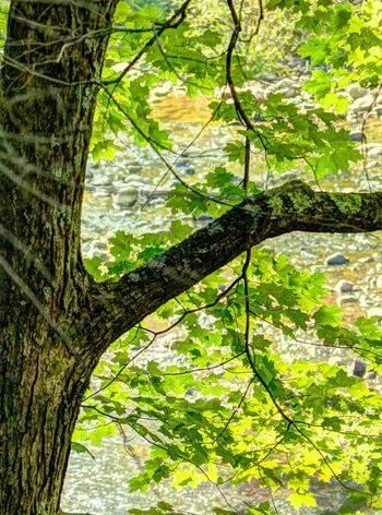 The magic of a forest. Trees Tree_collection  Light Light And Shadow Woods River Sparkle Nature The Great Outdoors - 2015 EyeEm Awards HDR