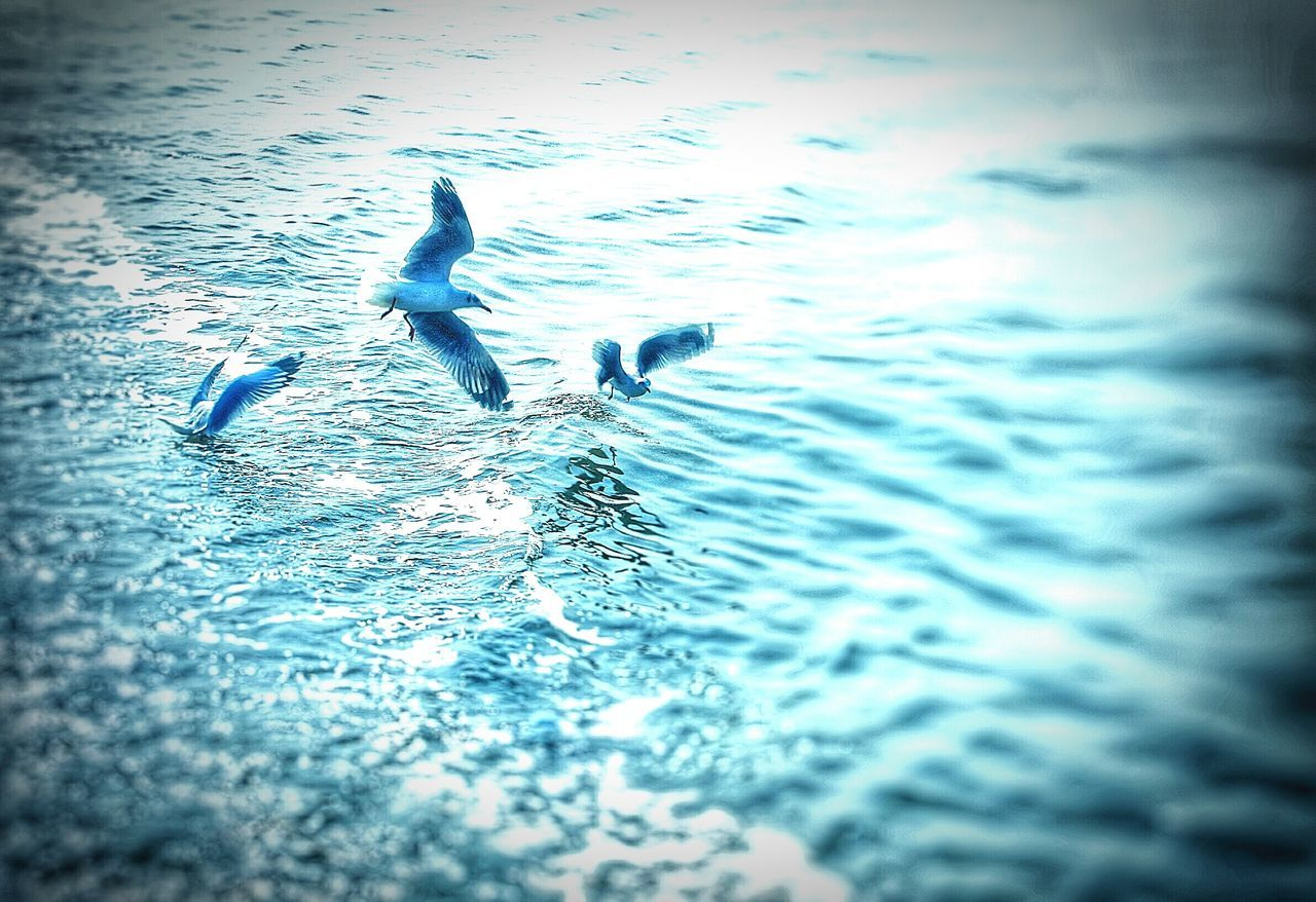 water, animal themes, animals in the wild, bird, nature, swimming, waterfront, rippled, animal wildlife, no people, motion, outdoors, day, swan, sea, sunset, beauty in nature, spread wings, sky