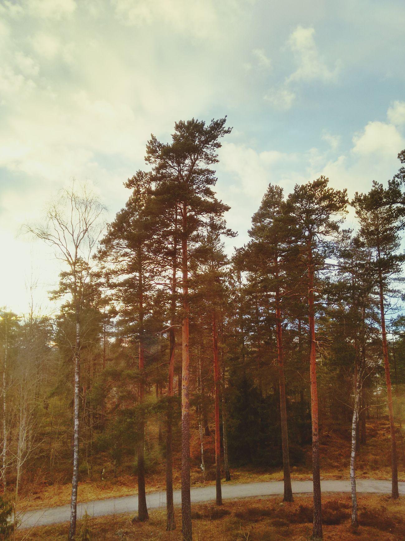Forestpower