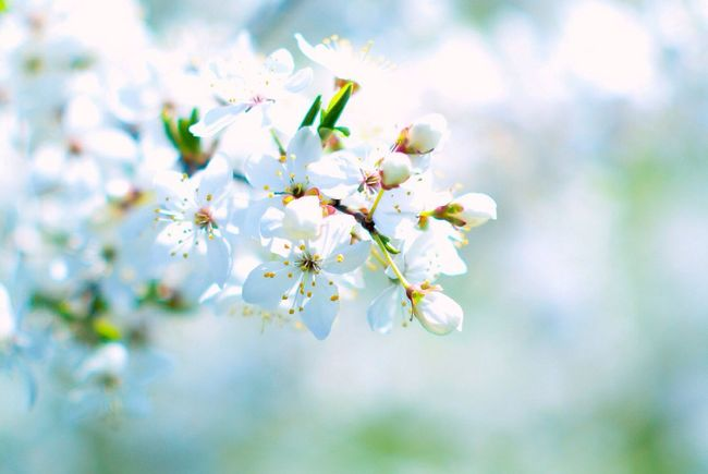 Nikon 1 V1 Nikkor 50mm F1.4 Flowers