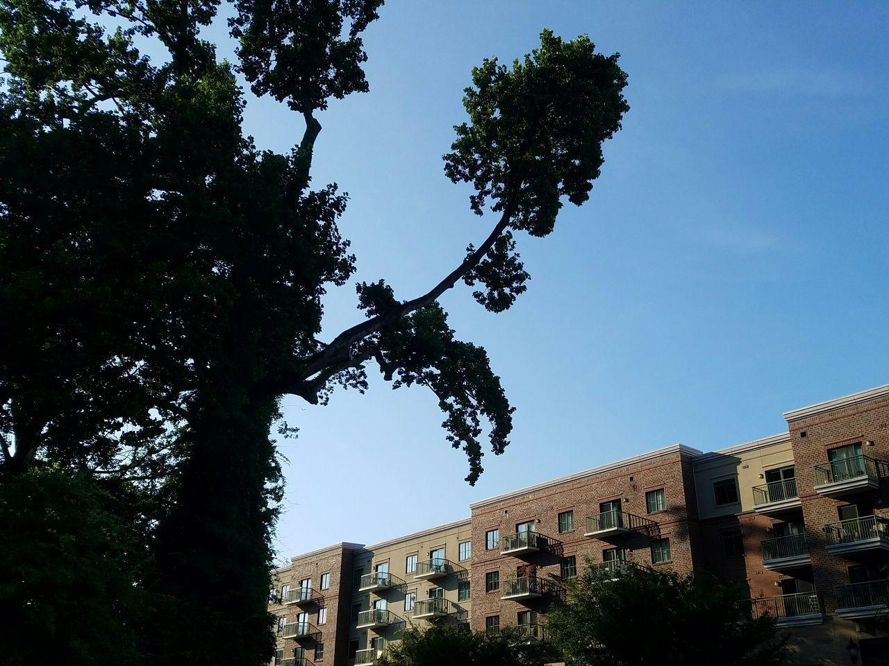 The Unsuspectable America . USA Tree Bulding Carolinablue Northcarolina Charlotte