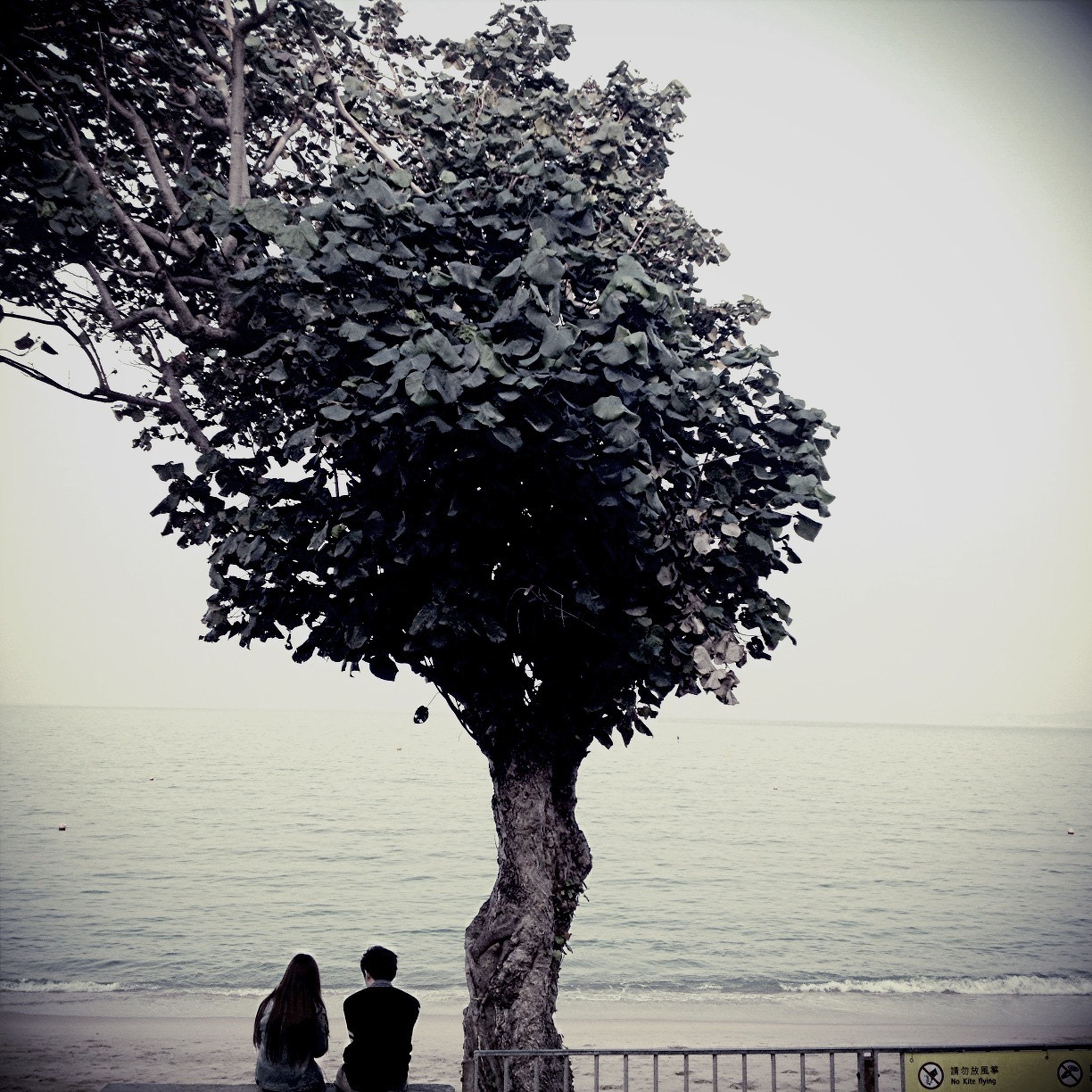 water, sea, tree, horizon over water, nature, tranquility, beauty in nature, lifestyles, standing, men, branch, tranquil scene, leisure activity, sky, person, scenics, silhouette, clear sky, growth