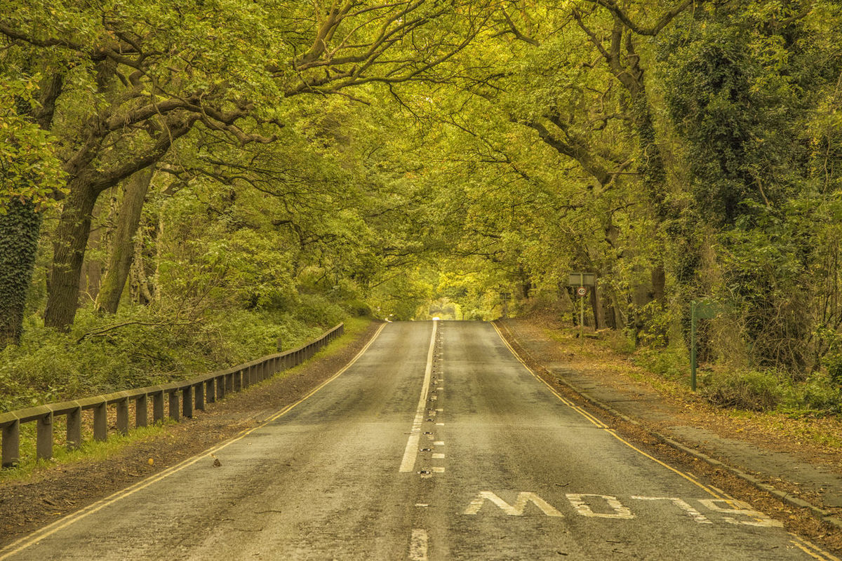 Delamere Forest Autumn Delamere Forest Tree Trunk Trees Beauty In Nature Day Forest Green Color Nature No People Outdoors Road Scenics The Way Forward Tranquil Scene Tranquility Transportation Tree