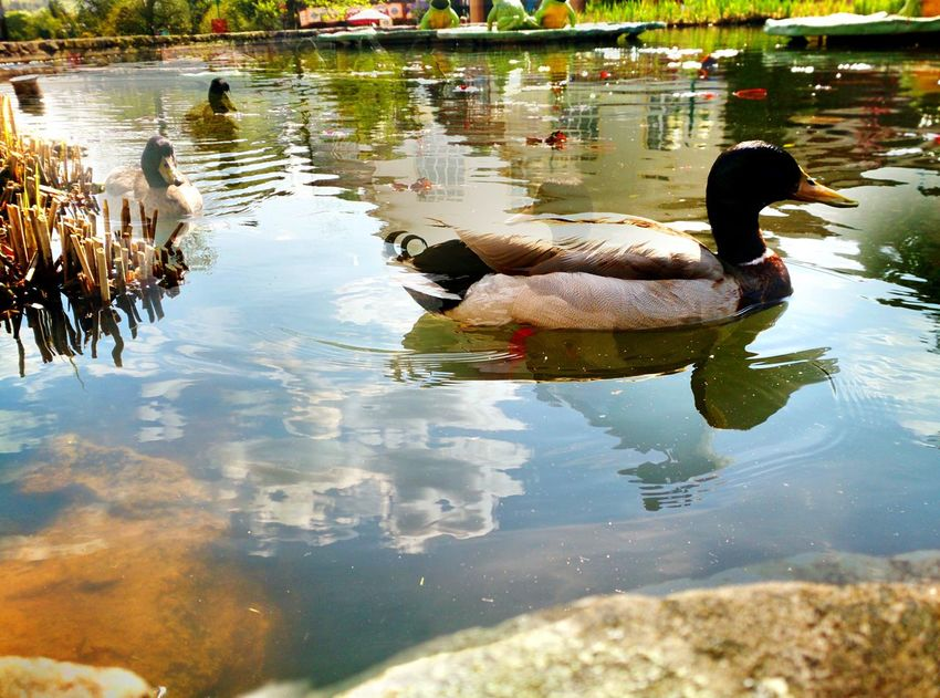 Water Animal Themes Animals In The Wild Bird Nature Lake Animal Wildlife Outdoors Day No People Jehovahscreation AltonTowers