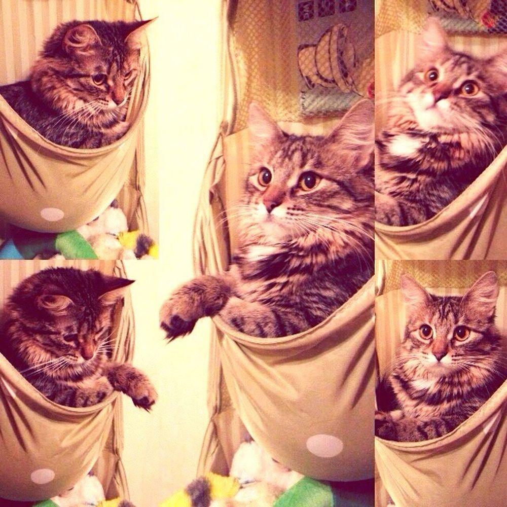 Кошачье гнездо. кот кошечка Котик гнездо