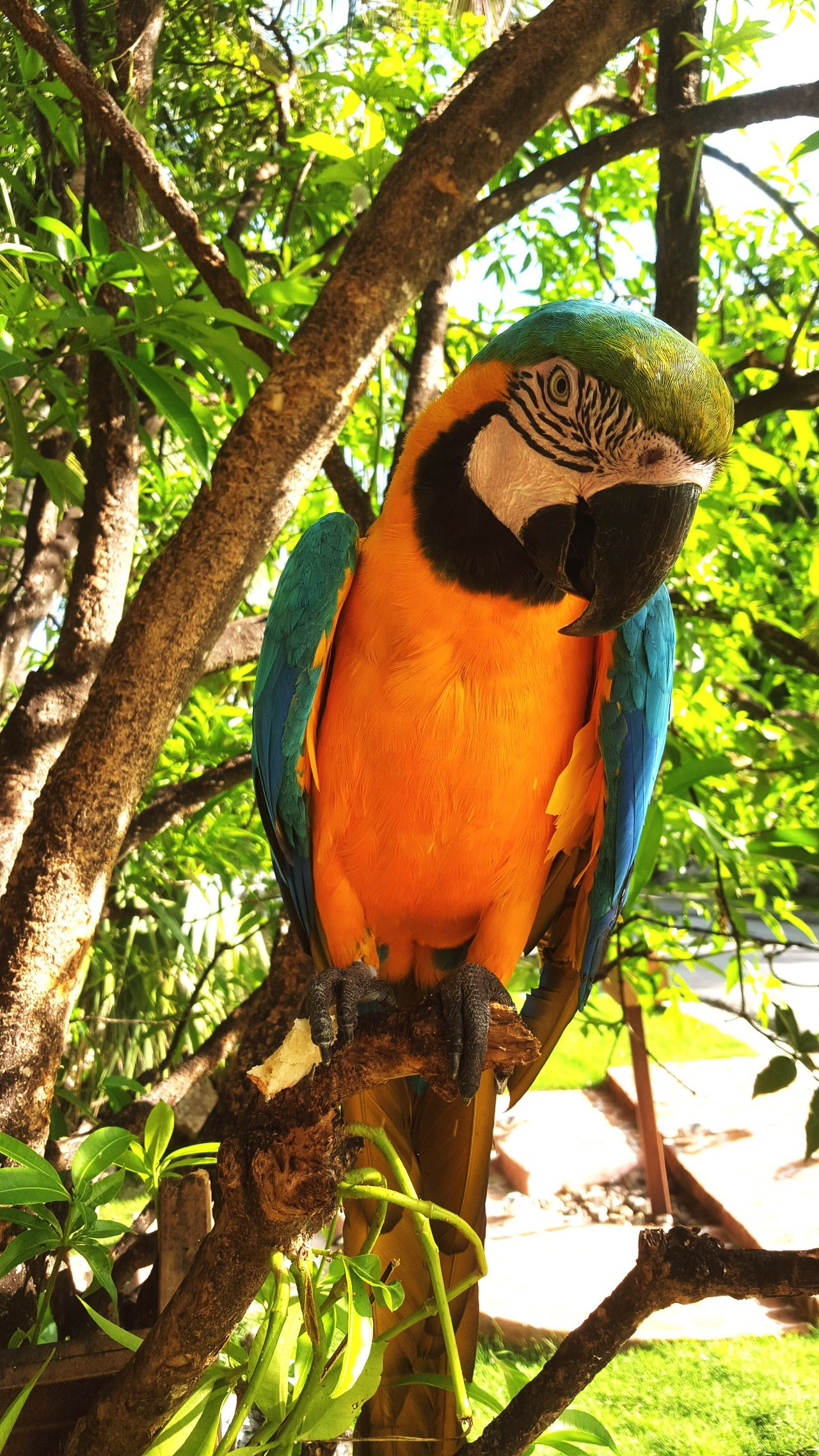 See me. Not my color. Bird Close-up Perching Multi Colored Parrot Macaw