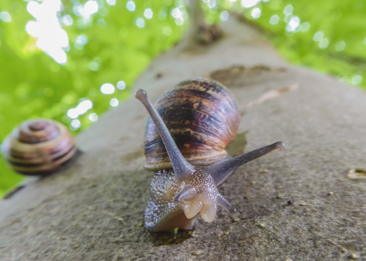 Snail Shell Crawling Slithering Mollusc Tree Tree Trunk Looking Up Depth Of Field Countryside Nature Photography Nature Macro Green