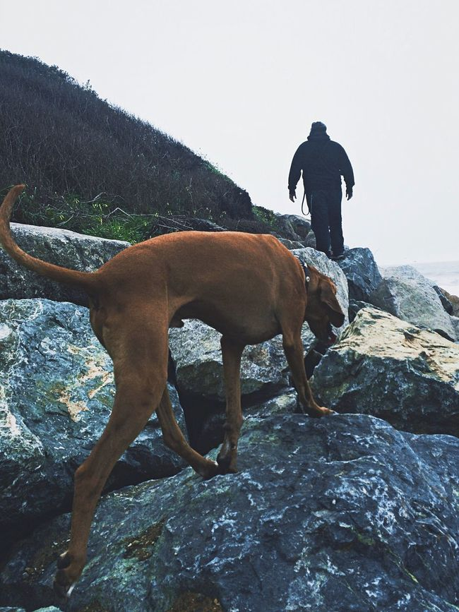 Picturing Individuality The Adventure Handbook A Boy And His Dog Coonhound California Coastline Hiking Overcast Dogs Puppy Love Rock Formation